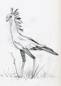 SECRETARY BIRD